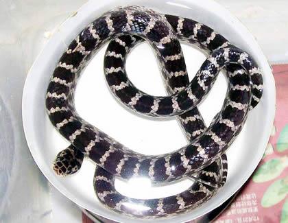 晚上梦到很多蛇